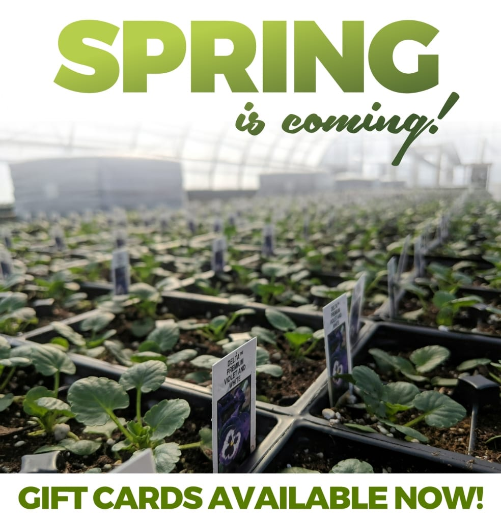 Spring is coming! Gift cards are available now!