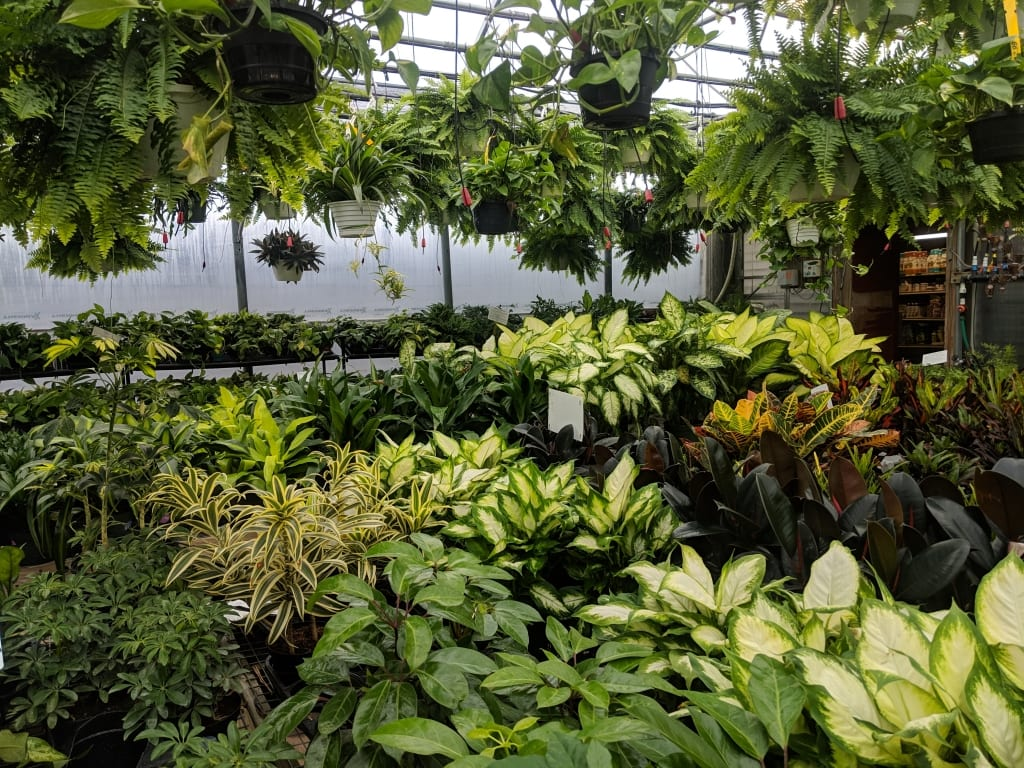 Houseplants   Broadway Gardens Greenhouses Inc. on colorful evergreen plants, colorful succulents, colorful orchids, flowers that thrive in shade, colorful raindrops, colorful tropical plants, colorful drought tolerant plants, colorful container plants, colorful vegetables, fruit trees for shade, colorful florida plants, colorful trees, colorful potted plants, colorful perennials, palm trees for shade, colorful foliage, flowers for shade, colorful air plants, colorful plants for shady areas, colorful plants for landscaping,