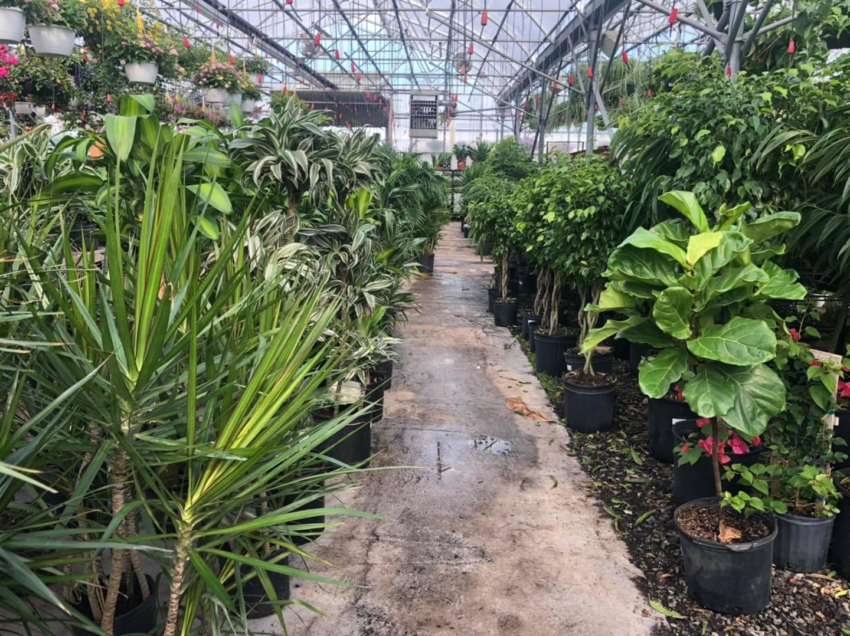 house plants portland, me
